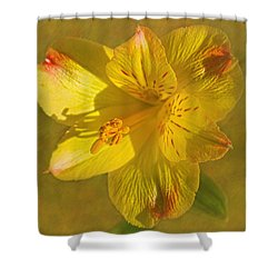 Peruvian Lily Shower Curtain by Sandi OReilly