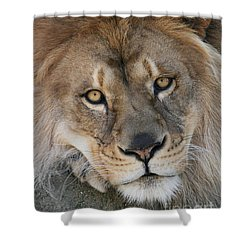 Pet Me Shower Curtain by Judy Whitton