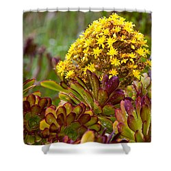 Petal Dome Shower Curtain by Melinda Ledsome