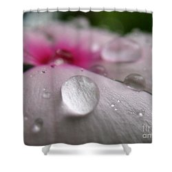 Petal Surfing II Shower Curtain by Patti Whitten