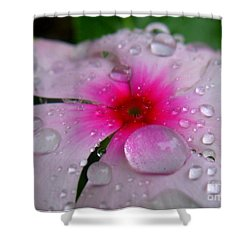 Shower Curtain featuring the photograph Petal Surfing by Patti Whitten