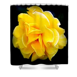 Petals And Lace Shower Curtain by Karen Wiles