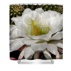 Shower Curtain featuring the photograph Petals And Thorns by Deb Halloran