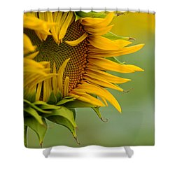 Shower Curtain featuring the photograph Petals by Ronda Kimbrow