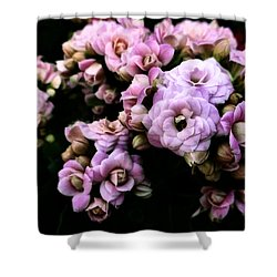 Petite And Pink Shower Curtain by Steve Taylor
