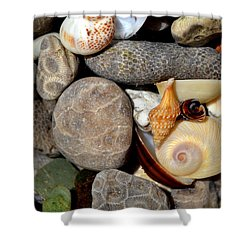 Petoskey Stones Ll Shower Curtain by Michelle Calkins