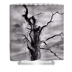Petrified Tree Shower Curtain