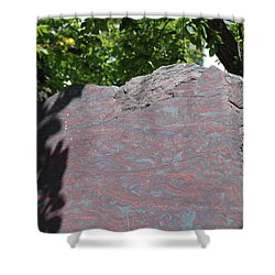 Petrified Wood On Display Shower Curtain