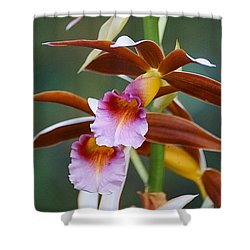 Shower Curtain featuring the photograph Phaius Tankervilliae Orchid by Blair Wainman
