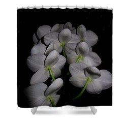 Phalaenopsis Backs Shower Curtain by Joyce Dickens