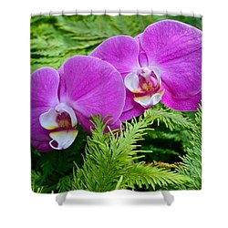 Phalaenopsis Moth Orchids Shower Curtain by Venetia Featherstone-Witty