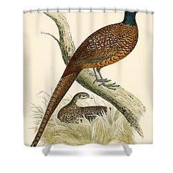 Pheasant Shower Curtain by Beverley R Morris
