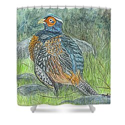 Shower Curtain featuring the drawing Pheasant Common Male by Carol Wisniewski