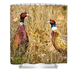 Pheasant Friends Shower Curtain