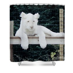 Shower Curtain featuring the photograph Philadelphia Zoo White Lion by Donna Brown