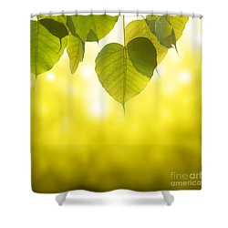 Pho Or Bodhi Shower Curtain by Atiketta Sangasaeng