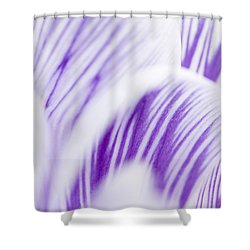 Pickwick Shower Curtain by Anne Gilbert
