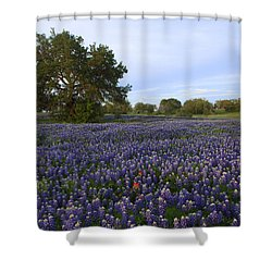 Picture Perfect Shower Curtain by Susan Rovira