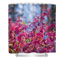 Picturesque Autumn - Featured 3 Shower Curtain by Alexander Senin