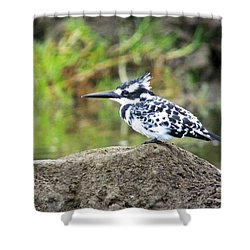 Pied Kingfisher Shower Curtain