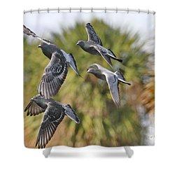 Pigeon Brigade Shower Curtain by Deborah Benoit