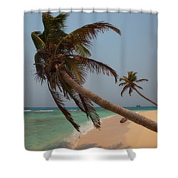 Pigeon Cays Palm Trees Shower Curtain by Susan Rovira