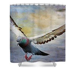 Pigeon On Wing Shower Curtain by Deborah Benoit