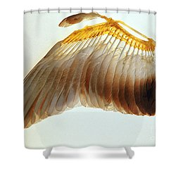 Pigeon Wing Shower Curtain by Biophoto Associates