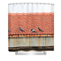 Shower Curtain featuring the photograph Pigeons On Roof by Aaron Martens
