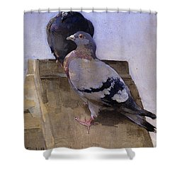 Pigeons On The Roof Shower Curtain by Joseph Crawhall