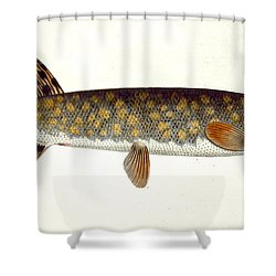 Pike Shower Curtain by Andreas Ludwig Kruger