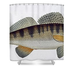 Pike Perch Shower Curtain by Andreas Ludwig Kruger
