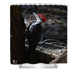 Pileated Woodpecker Shower Curtain by James Petersen
