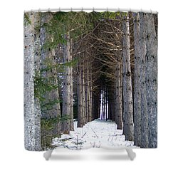 Pine Cathedral Shower Curtain