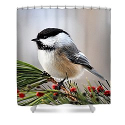 Shower Curtain featuring the photograph Pine Chickadee by Christina Rollo