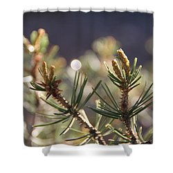 Shower Curtain featuring the photograph Pine by David S Reynolds