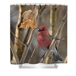 Shower Curtain featuring the photograph Pine Grosbeak by David Porteus