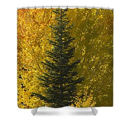 Pine In Aspens Shower Curtain