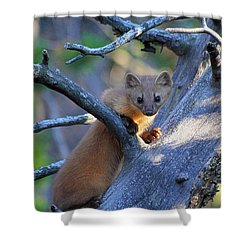 Pine Martin Shower Curtain