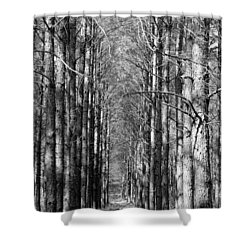 Pine Plantation Shower Curtain