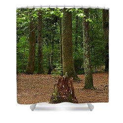 Pine Stump Shower Curtain