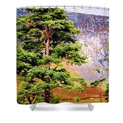 Pine Tree In Wicklow Hills. Ireland Shower Curtain by Jenny Rainbow