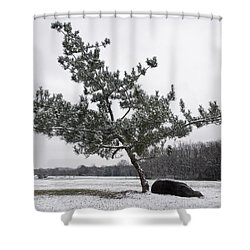 Pine Tree Shower Curtain by Melinda Fawver