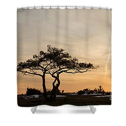 Pine Tree Portrait Shower Curtain