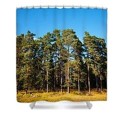Pine Trees Of Valaam Island Shower Curtain by Jenny Rainbow