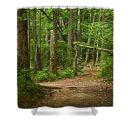 Pinewood Path Shower Curtain