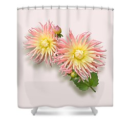 Pink And Cream Cactus Dahlia Shower Curtain by Jane McIlroy