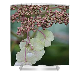Pink And Green Hydrangea Closeup Shower Curtain by Carol Groenen