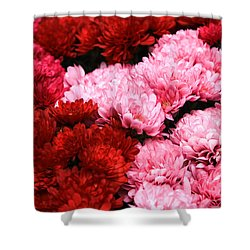 Pink And Red Shower Curtain by Menachem Ganon