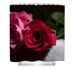 Shower Curtain featuring the photograph Pink And Red Rose by Matt Malloy